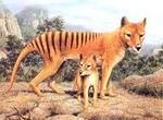 К 2020 году мир потеряет две трети диких животных