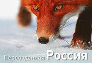 Первозданная Россия (Избранные фотографии фестиваля)
